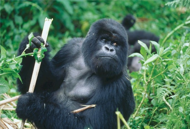 Explained: What Is Corning's Gorilla Glass